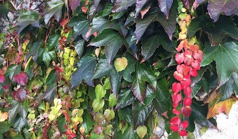 Herbstzeit – Erkältungszeit!